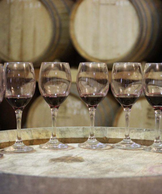 al sur gourmet distribución de vinos en cádiz
