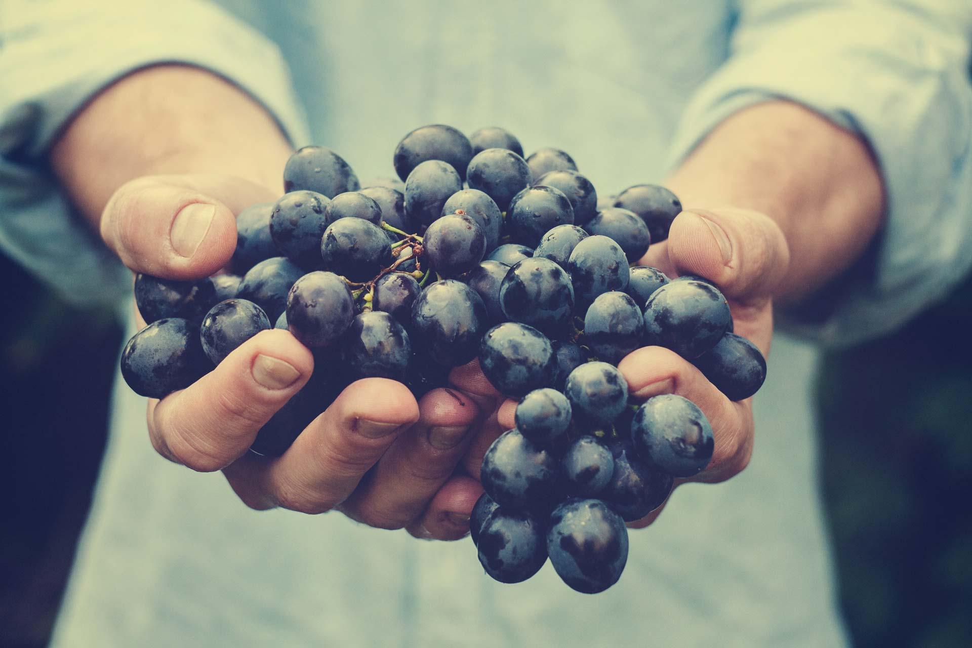 distribución vinos cádiz al sur gourmet