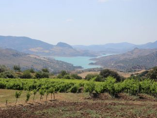 al sur gourmet vinos de ronda cádiz samsara