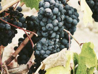 al sur gourmet venta vino cádiz